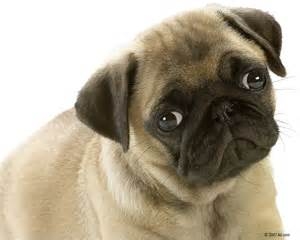 Animals Zoo Park: 8 Cute Puppies Wallpapers, Cute Puppy Wallpapers for