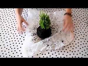 Kokedama Selber Machen : diy hanging kokedama japanese moss balls plant tutorial youtube video pinterest plants ~ Orissabook.com Haus und Dekorationen