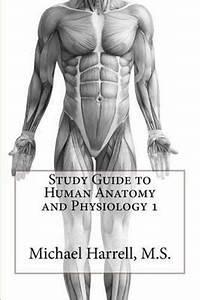 Human Anatomy Homework Help