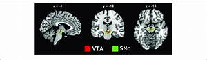 Seed Regions  The Ventral Tegmental Area  Vta  And