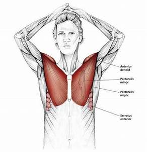 Above The Head Chest Stretch