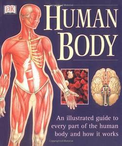 Human Body  An Illustrated Guide To Every Part Of The