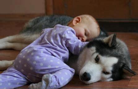 Dzīvnieku loma bērna attīstībā - Padomi - epadomi.lv