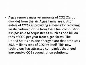 Algae Based Biofuels