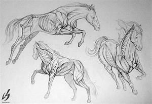 474 Best Images About Drawing And Painting Horses On Pinterest