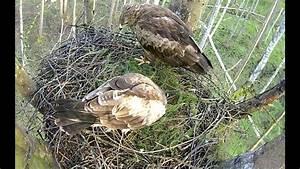 Monitorowanie Gniazdo Orlika Krzykliwego -- Mamy Jajo
