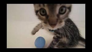 Gemüse Für Katzen : filme f r katzen vol 1 tiere die katzen lieben dvd ~ Watch28wear.com Haus und Dekorationen