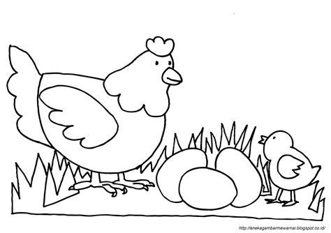 14 gambar mewarnai binatang laut anak tk paud dan sd. Gambar Mewarnai Ayam Untuk Anak PAUD dan TK