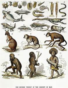 Evolution Chart Photograph By Granger