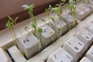 Keyboard, Pretty, Photography