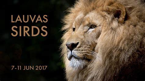 Lauvas sirds - Apzinātības un miera prakse