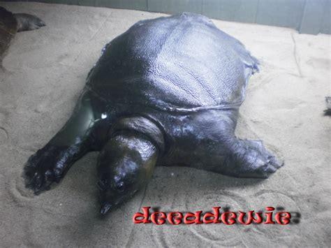 Sekejap di Museum Zoologi | This is Me, Dewi