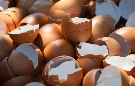 We also provide an article index for this topic, or you can try the page top or bottom search box as a quick way to find information you need. Can you put eggshells down the garbage disposal? - Myria