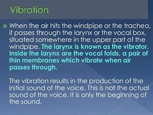 Voice Production