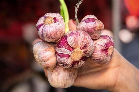 Ķiploku audzēšana - uz popularitātes viļņa :: Dienas Bizness