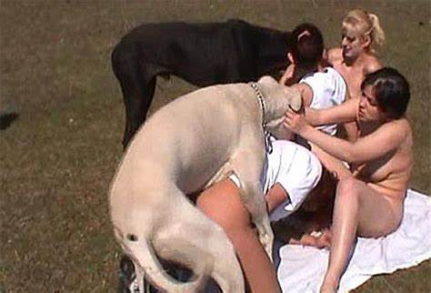 Orgy Group With Greatdane