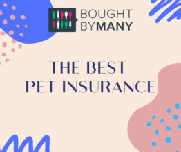 A solid reputation for fast claims approval and payments should put embrace on your list of. Best Pet Insurance for Dogs 2021 - Bought By Many