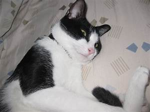 Je Donne Tout Gratuit : je donne chat noir et blanc hauts de seine 92 gratuit sur ~ Gottalentnigeria.com Avis de Voitures