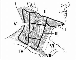 Cervical Lymph Node  Division Of Cervical Neck Lymph Nodes