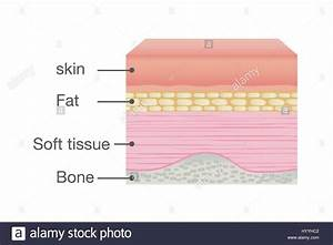Normal Skin Anatomy Of Human Stock Vector Art