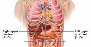 Male Anatomy Diagram
