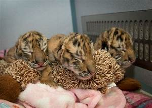 Cute Baby Animals  The Most Adorable Zoo Babies Of 2015