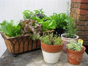 The benefits of container vegetable gardening desain for Container vegetable gardens