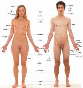 Anexo Partes Del Cuerpo Humano