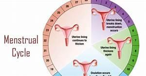 My Fertility Manual