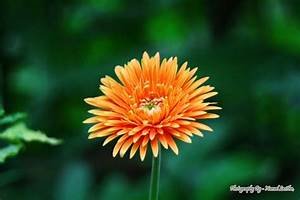 Microsoft Word Terms Babandesiya Flower Photo By Photography By Namal Lasitha