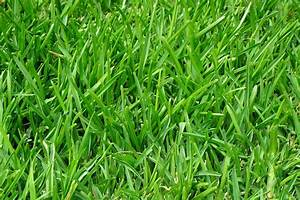 Fertilization Services  Best Fertilizers For Grass