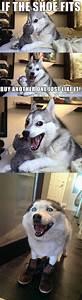 husky dog meme joke MEMEs