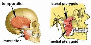 Can Physical Therapists Treat Temporomandibular Joint