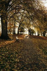 Alley, Covered, With, Yellow, Leaves, In, Park, On, Autumn, Day, U00b7, Free, Stock, Photo