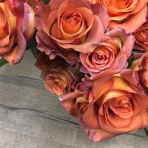 An exquisite fusion of the two colors on the petals of perfect form makes this hybrid tea rose is a real. Roses, roses, roses. The Coffee Break roses, the orangey ...