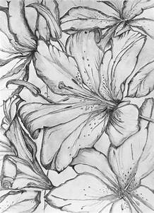 Gallery: Drawings Of Tiger Lilies, - DRAWING ART GALLERY