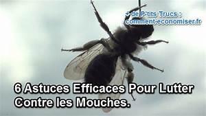 Comment Chasser Les Mouches : 5 astuces efficaces pour lutter contre les mouches new ~ Melissatoandfro.com Idées de Décoration