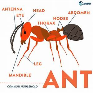 Learn More About Ants And How To Get Rid Of An Infestation