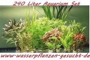 Pflanzen Holländer Berlin : aquariumpflanzen kleinanzeigen tiermarkt deine ~ Watch28wear.com Haus und Dekorationen