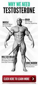Low Testosterone Symptoms Causes And Its Treatment Bodybuilding Program