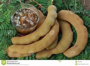 Green Tamarind Fruit
