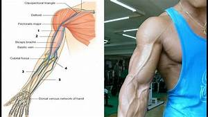 How To Get The Bicep Vein