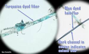 Human Hair Strand Under Microscope