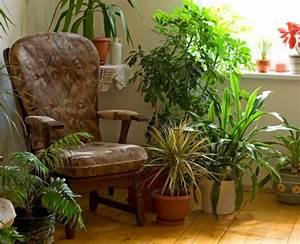 Zimmerpflanzen Feng Shui : zimmerpflanzen garten ~ Indierocktalk.com Haus und Dekorationen
