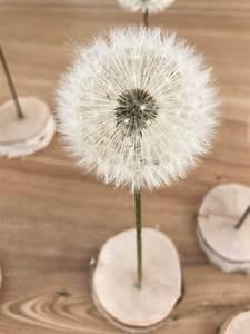 Hortensien Haltbar Machen : pusteblume haltbar machen zum verschenken mit strich und faden ~ A.2002-acura-tl-radio.info Haus und Dekorationen