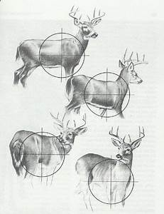 Deer Diagram  With Images