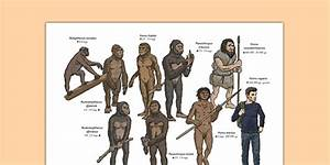Human Evolution Physical Appearance Diagram
