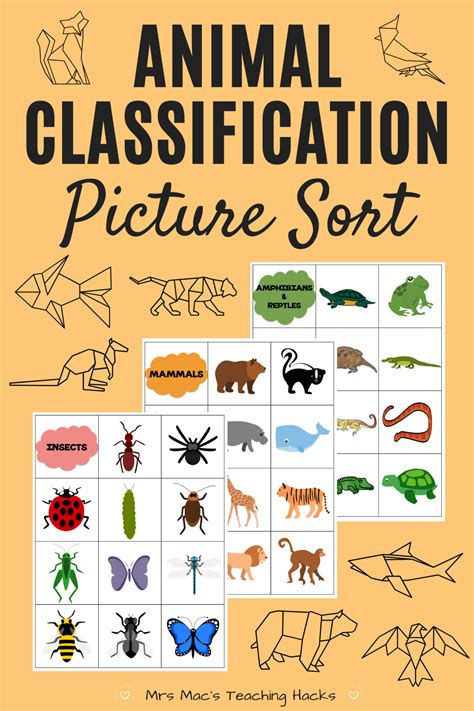 Animal Classification Picture Sort Animal classification
