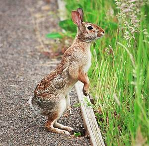 1000+ images about Military Bunnies on Pinterest | Wild ...