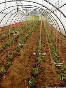 Quand Planter Les Tomates Cerises : plantation des tomates la ferme du hanneton ~ Farleysfitness.com Idées de Décoration